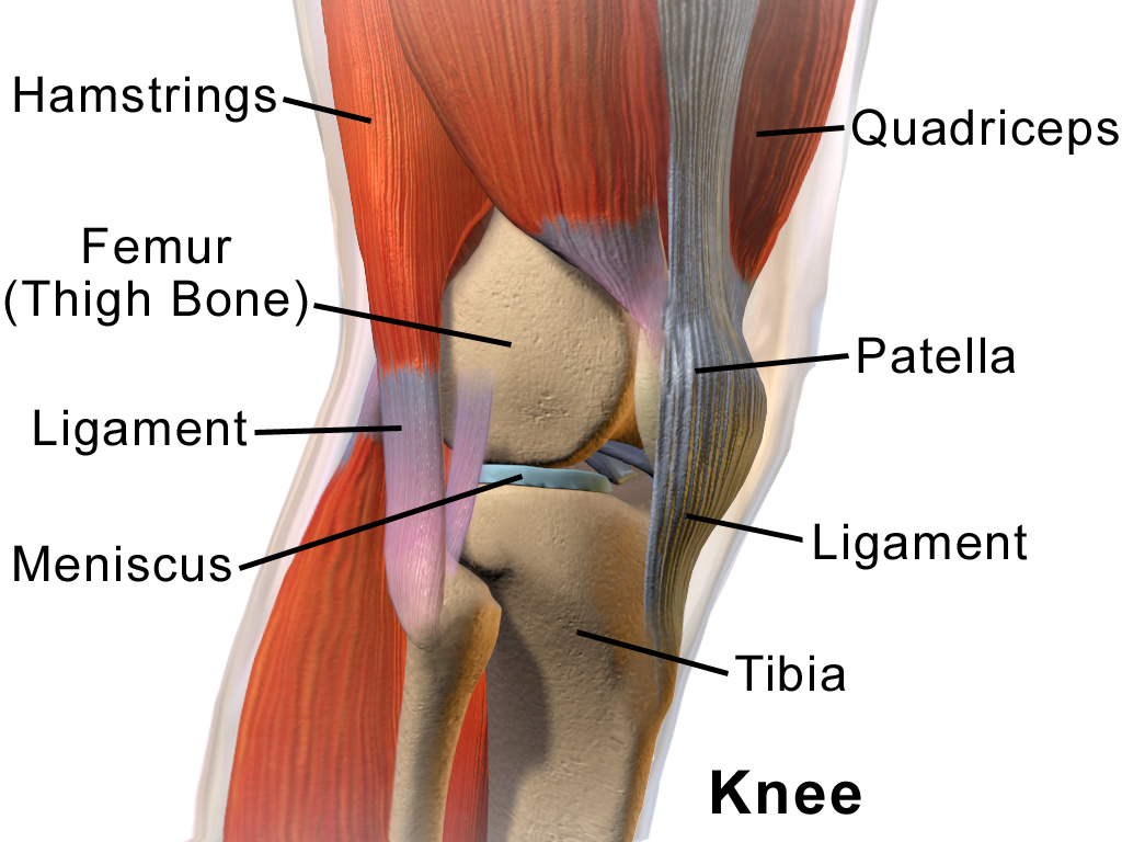 Blausen_0597_KneeAnatomy_Side